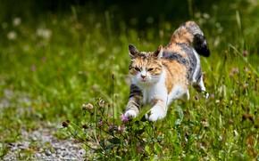 Picture greens, cat, summer, grass, look, face, flowers, nature, pose, jump, meadow, running, clover, walk, bokeh, …