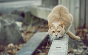 Picture cat, red, alert