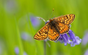 Picture flower, macro, background, butterfly, insect, red