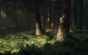 Picture forest, trees, people, twilight, fern