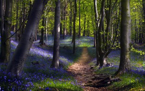 Picture forest, flowers, nature, spring