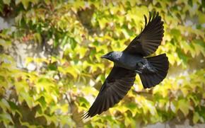 Picture nature, bird, flight