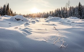 Picture winter, forest, the sky, the sun, snow, trees, the snow