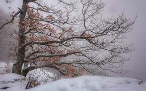 Picture winter, nature, tree