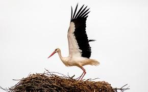 Picture bird, socket, stork
