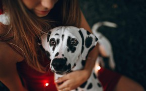 Picture look, girl, dog, Dalmatians