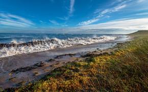 Picture grass, shore, coast