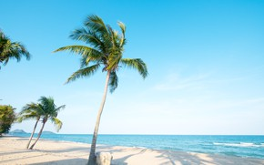 Picture sand, sea, wave, beach, summer, the sky, palm trees, shore, summer, beach, sea, seascape, beautiful, …