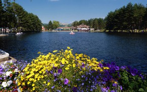 Picture flowers, Serbia, The Lake Zlatibor