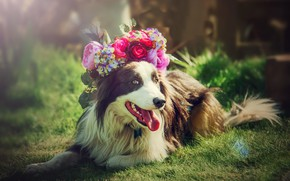 Picture each, dog, wreath