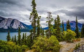 Wallpaper forest, the sky, clouds, trees, mountains, clouds, nature, lake, stones, beauty, Alaska, Tutshi Lake
