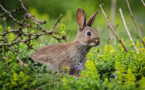 Picture grass, rabbit, baby