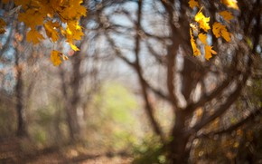 Picture autumn, leaves, light, trees, branches, nature, Park, background, mood, trunks, foliage, blur, yellow, maple, leaves, …