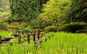 Picture greens, nature, lake, plants, the bridge
