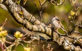 Picture leaves, light, branches, background, tree, bird, blur, spring, beak, shadows, grey, bird, on the branch, …