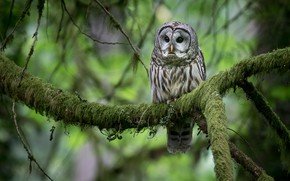 Picture greens, forest, owl, bird, branch