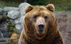 Picture look, face, portrait, bear, zoo