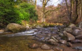 Picture landscape, nature, river, beauty
