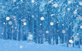 Picture winter, frost, forest, snow, branches, treatment, snowfall, bokeh