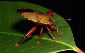 Picture macro, sheet, beetle