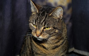 Picture cat, sitting on the floor, striped