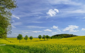 Picture greens, field, the sky, grass, photo