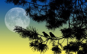 Picture birds, night, branches, the moon, silhouettes