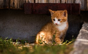Picture cat, look, light, kitty, red, kitty, concrete, sitting