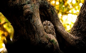 Picture light, tree, owl, bird, trunk, bokeh, Peeps, the hollow