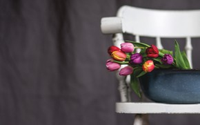 Picture background, bouquet, chair, tulips, basin