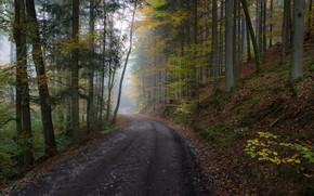 Wallpaper road, autumn, forest, leaves, trees, fog, slope