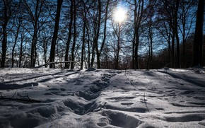 Picture winter, snow, trees, landscape, traces, nature, beauty