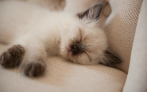 Picture kitty, sofa, baby, sleeping