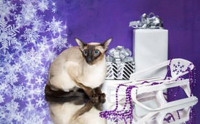 Picture cat, snowflakes, reflection, gifts, New year, beads, sled, cat, Siamese cat, Natalia Lays
