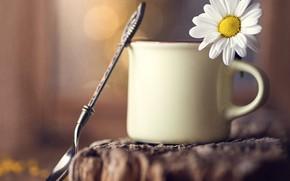 Picture flower, macro, Daisy, spoon, mug, bokeh