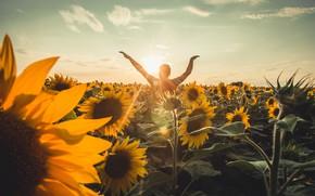 Picture summer, light, sunflowers, flowers, pose, mood, bird, eagle, back, man, yellow, hands, male, walk, sunflower, …