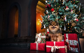 Picture tree, dog, Christmas, gifts, New year
