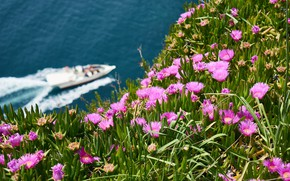 Picture sea, greens, summer, flowers, nature, mood, shore, boat, slope, hill, pink, a lot, on the …