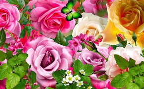 Picture flowers, roses, colored