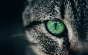 Picture green, cat, macro, cats, eye, look, closeup, striking, pupil