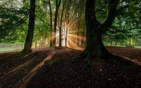 Picture Nature, Trees, Forest, Leaves, Branches, Shadow, The Rays Of The Sun, The Trunk Of The …