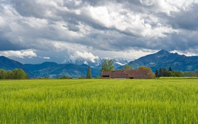 Picture greens, field, summer, the sky, grass, clouds, mountains, house, spring, space, province