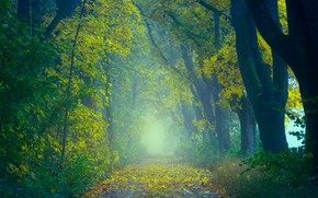 Picture road, autumn, forest, leaves, trees, nature, fog