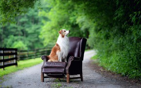 Picture road, dog, chair