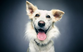 Picture language, face, joy, background, portrait, dog