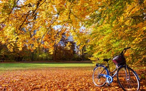 Picture autumn, leaves, the sun, trees, branches, bike, Park, yellow