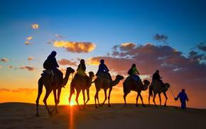 Picture desert, camels, caravan, Sugar