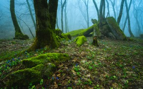 Picture forest, trees, nature, fog, moss, Russia, Stavropol Krai