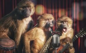 Picture concert, monkey, trio, speech