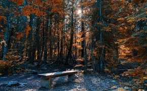 Picture nature, Park, bench